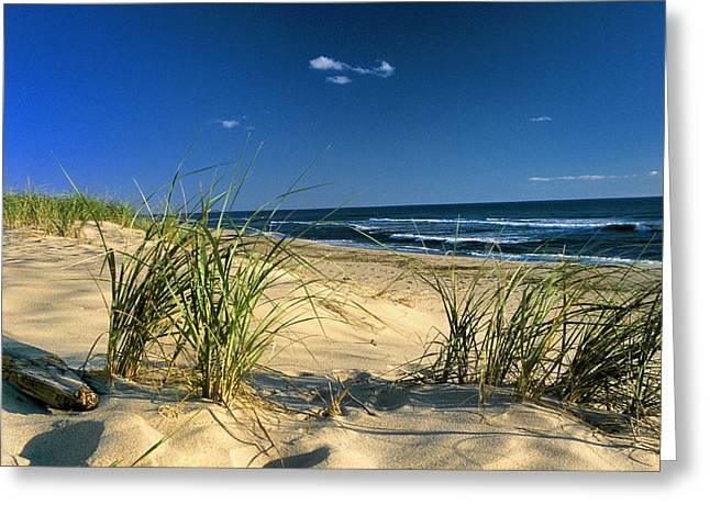 Cape Cod Mass Greeting Cards - Seashore Dunes Greeting Card by William McEvoy