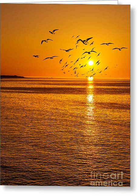 Bird Scape Greeting Cards - Seaside Birds Greeting Card by Svetlana Sewell