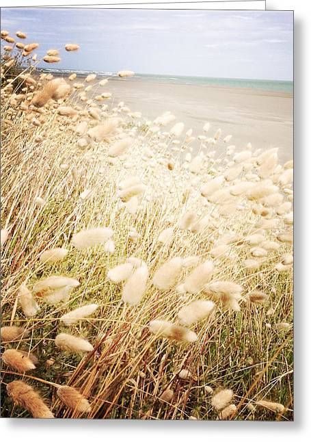 Grass Greeting Cards - Seaside grass Greeting Card by Les Cunliffe