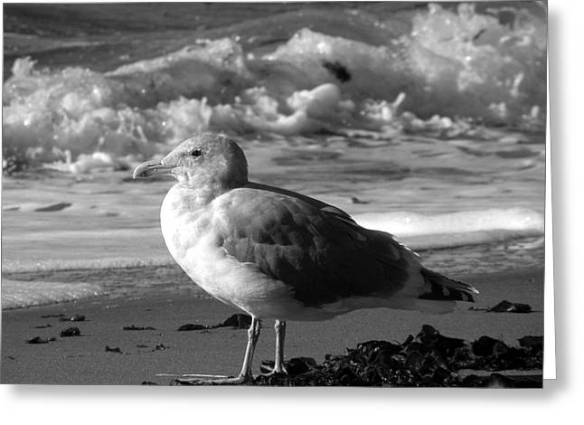Seaside Decor Posters Greeting Cards - Seaside Seagull Sees Surf Greeting Card by Brian Chase