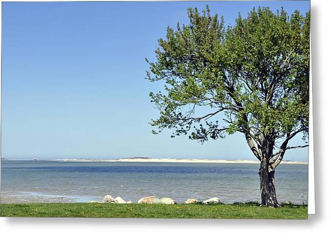South Boston Prints Greeting Cards - Seaside Serenity Greeting Card by Joanne Brown