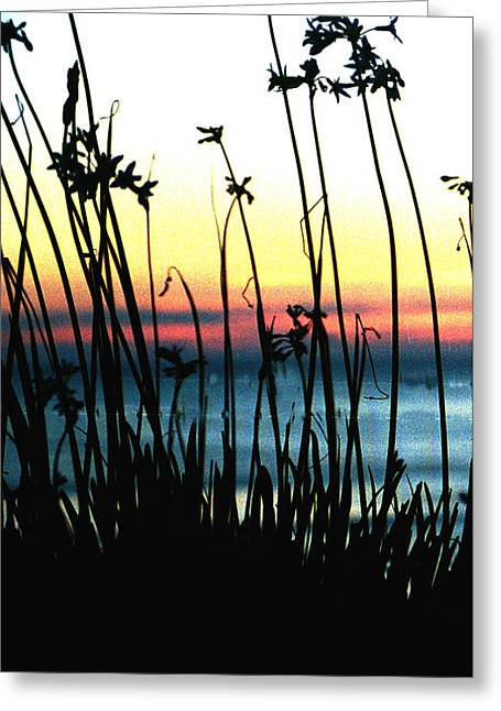 Seaside Digital Greeting Cards - Seaside Sunset Silhouettes Greeting Card by Barbara Snyder