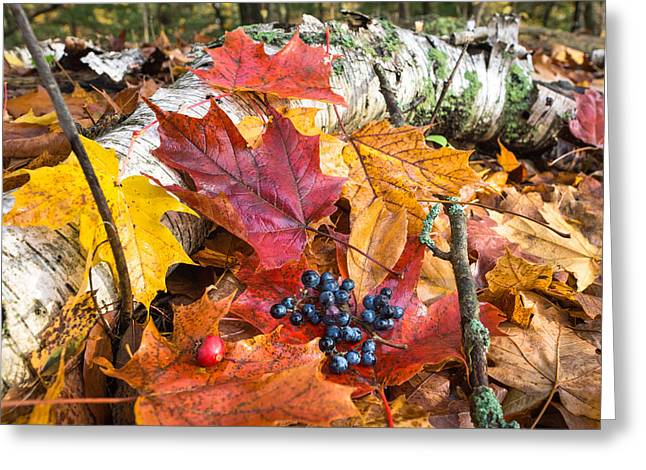 Fallen Leaf Greeting Cards - Season Finale  Greeting Card by Bill Pevlor