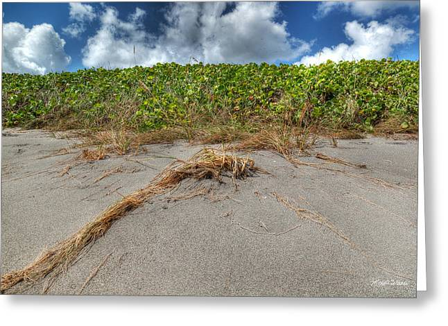 Hdr Landscape Greeting Cards - Season of the Dragonfly Greeting Card by Michelle Wiarda