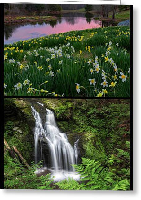Daffodil Greeting Cards - Season Suite Portrait Greeting Card by Bill  Wakeley