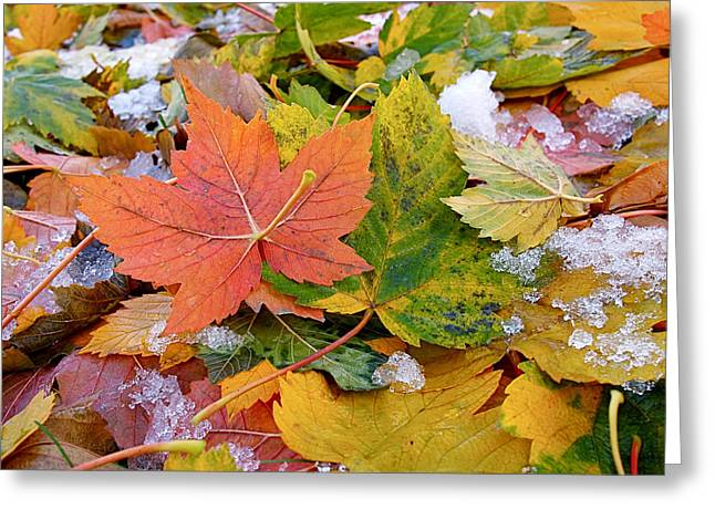 Orange Leaves Greeting Cards - Seasonal Mix Greeting Card by Rona Black