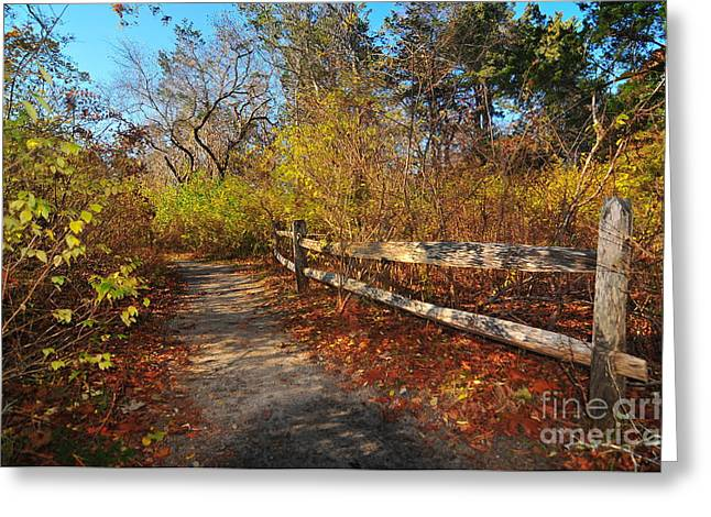 Falmouth Massachusetts Greeting Cards - Seasons Change Greeting Card by Catherine Reusch  Daley