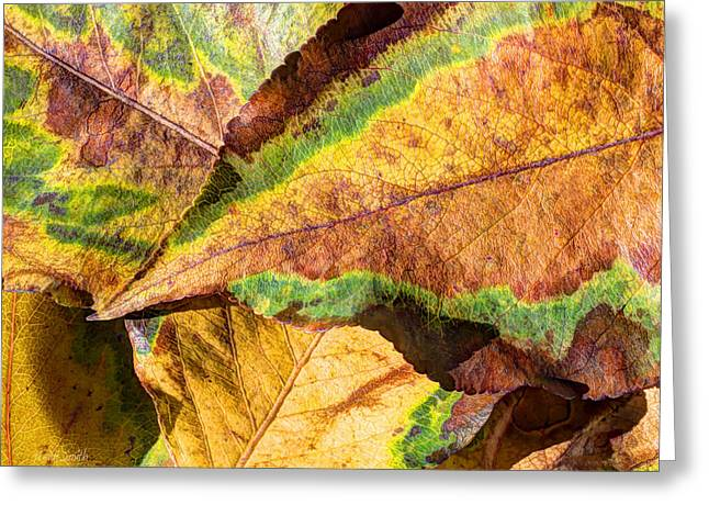 October Framed Greeting Cards - Seasons Change Greeting Card by Heidi Smith