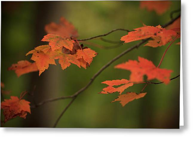 Orange Leaves Greeting Cards - Seasons Change Greeting Card by Shane Holsclaw