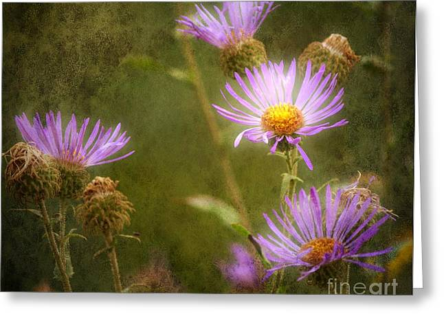 Aster Digital Art Greeting Cards - Seasons End Greeting Card by Barbara Chichester