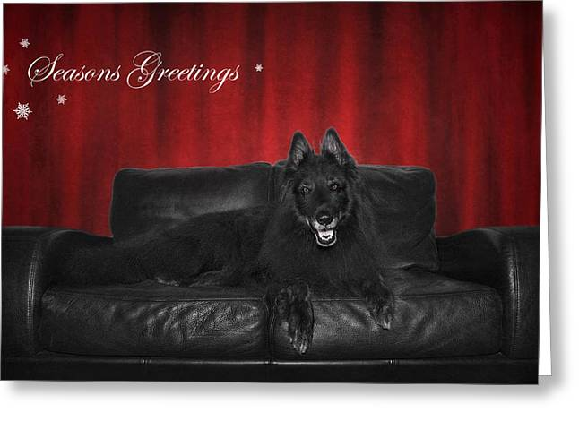 Sheepdog Greeting Cards - Seasons Greetings Greeting Card by Wolf Shadow  Photography