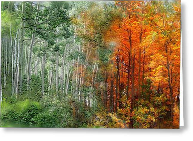 Seasons Of The Aspen Greeting Card by Carol Cavalaris