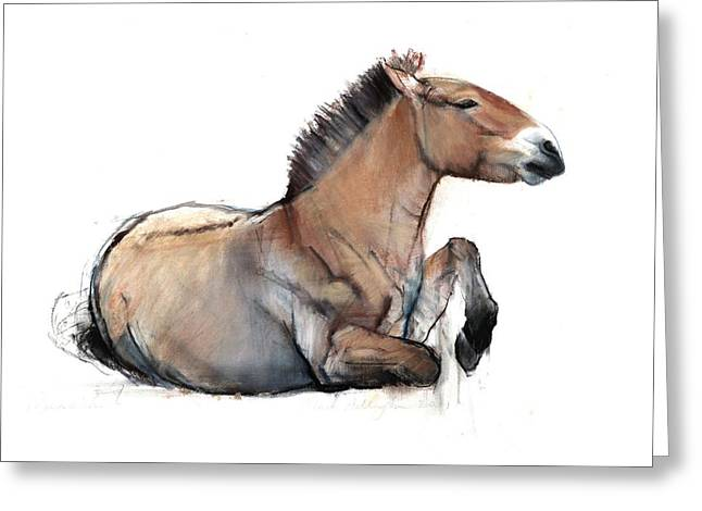 Equus Greeting Cards - Seated Przewalski, 2011, Charcoal, Conté And Pastel On Paper Greeting Card by Mark Adlington