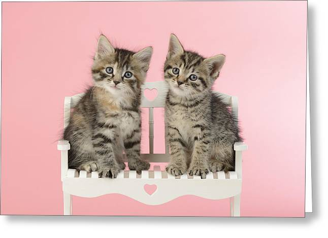 Valentine Greeting Cards - Seated Twin Tabbies Greeting Card by Greg Cuddiford