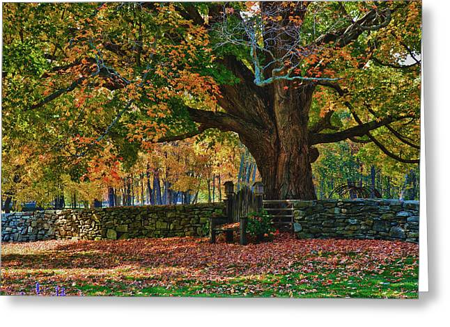 """autumn Foliage New England"" Greeting Cards - Seated Under The Fall Colors Greeting Card by Jeff Folger"