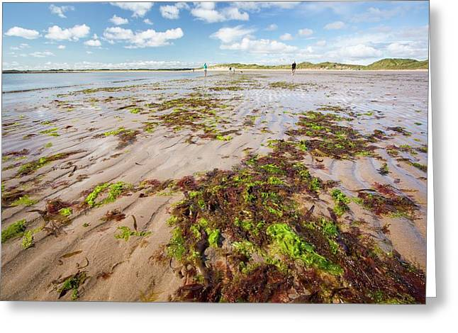 Seaweed And Sand Ripples Greeting Card by Ashley Cooper
