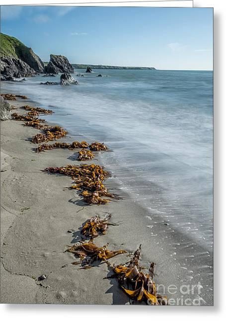Llyn Greeting Cards - Seaweed Beach Greeting Card by Adrian Evans