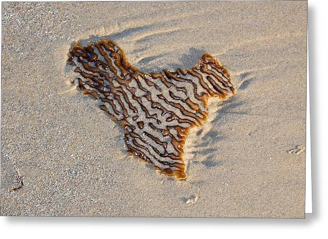 Ocean Vista Greeting Cards - Seaweed Heart Greeting Card by Debra Thompson