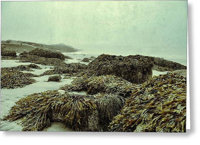 Maine Beach Digital Art Greeting Cards - Seaweed Greeting Card by Olivier Calas
