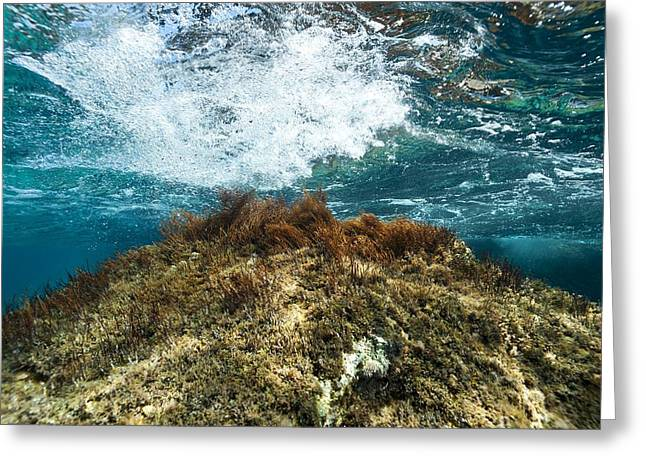 Algal Greeting Cards - Seaweed Greeting Card by Science Photo Library