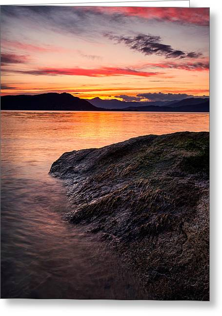 Seaweed Sunset Greeting Card by Alexis Birkill