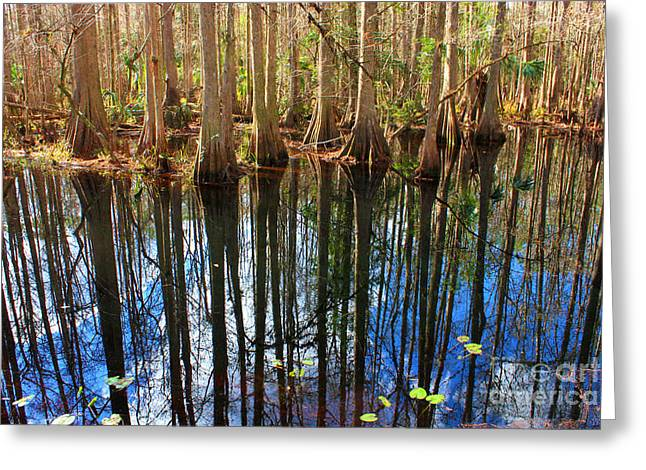 Florida Swamp Reflection Greeting Cards - Sebring Cypress Swamp Reflection Greeting Card by Carol Groenen