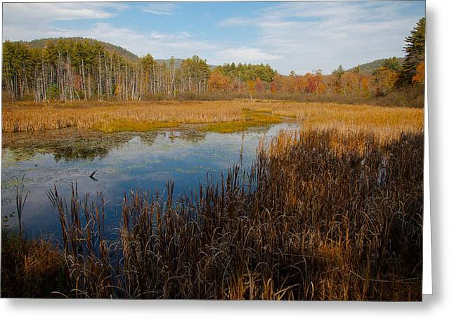 Fir Trees Greeting Cards - Secluded Adirondack Pond Greeting Card by David Patterson