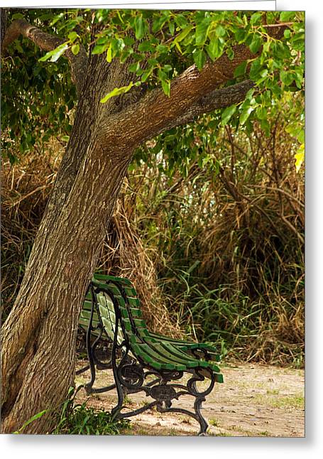 Peaceful Scenery Greeting Cards - Secluded Park Benches Greeting Card by Jess Kraft