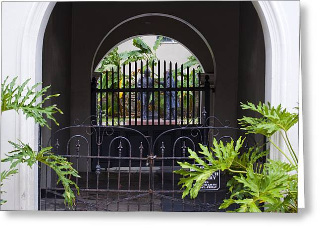 Philodendron Greeting Cards - Seclusion Greeting Card by Kenneth Albin