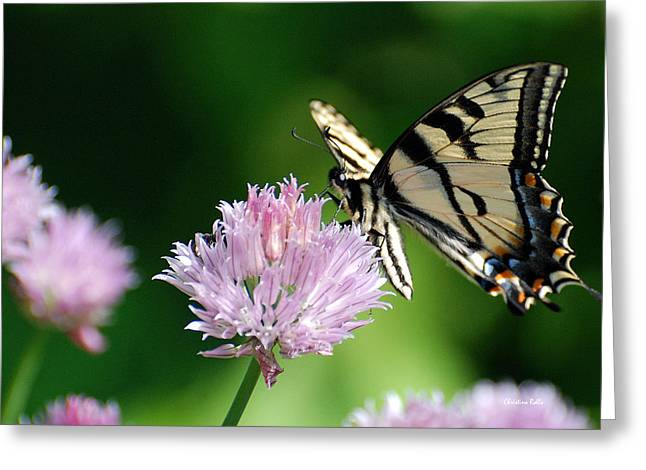 Butterfly On Flower Greeting Cards - Second Nature Butterfly Greeting Card by Christina Rollo