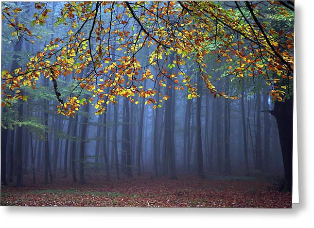 Autumn Landscape Photographs Greeting Cards - Seconds Before The Light Went Out Greeting Card by Roeselien Raimond