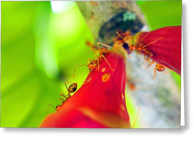 Justin Woodhouse Greeting Cards - Secret Ants Business Greeting Card by Justin Woodhouse
