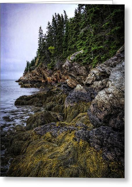 Foggy Ocean Greeting Cards - Secret Hideaway Greeting Card by Joan Carroll