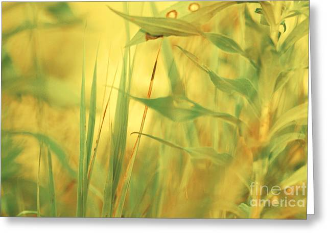 Abstract Paradise Greeting Cards - Secret Natures Paradise Greeting Card by Aimelle