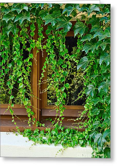 Green Foliage Greeting Cards - Secret Window - Covered by creeping ivy. Greeting Card by Jamie Pham