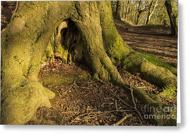 Tree Roots Greeting Cards - Secret Woodland Home Greeting Card by Mandy Jervis