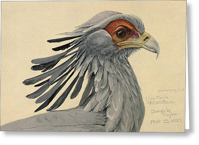 Naturalist Greeting Cards - Secretary Bird Greeting Card by Louis Agassiz Fuertes