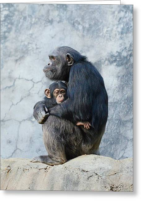 Chimpanzee Greeting Cards - Security Greeting Card by Fraida Gutovich