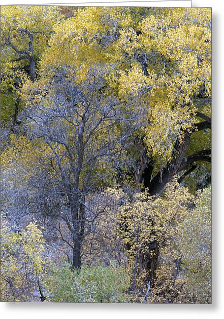Tam Ryan Greeting Cards - Sedona Fall Color Greeting Card by Tam Ryan