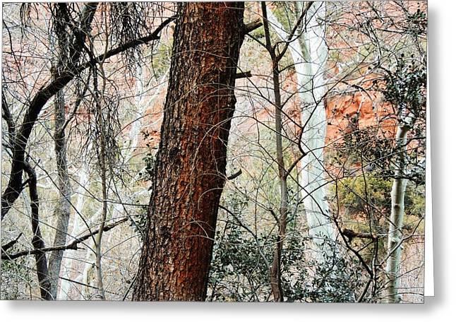 Brown White Sedona Trees Greeting Cards - Sedona Layers Greeting Card by Todd Sherlock