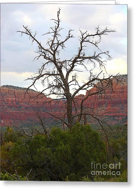 Red Rocks Of Sedona Greeting Cards - Sedona Tree Greeting Card by Carol Groenen
