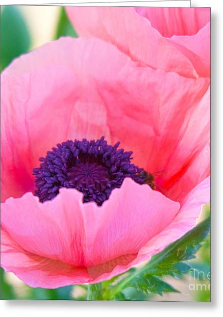 Floral Digital Art Greeting Cards - Seductive Poppy Greeting Card by Roselynne Broussard