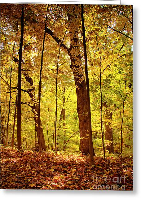 Indiana Autumn Greeting Cards - See Greeting Card by Lynne Dohner