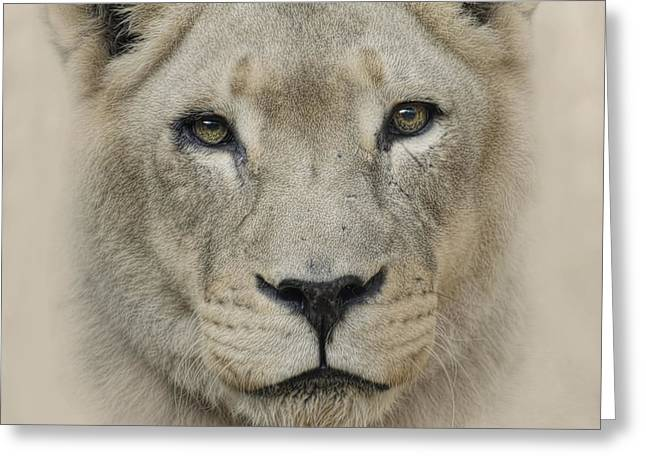 Lioness Greeting Cards - See me Greeting Card by Cheri McEachin