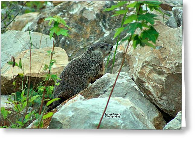 Groundhog Digital Greeting Cards - See Rock City Greeting Card by Lorna Rogers Photography