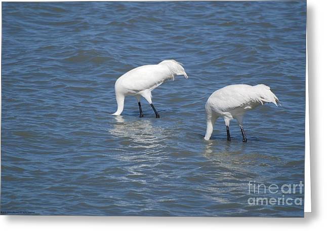 Wingtips Greeting Cards - See Sea Greeting Card by GD Rankin