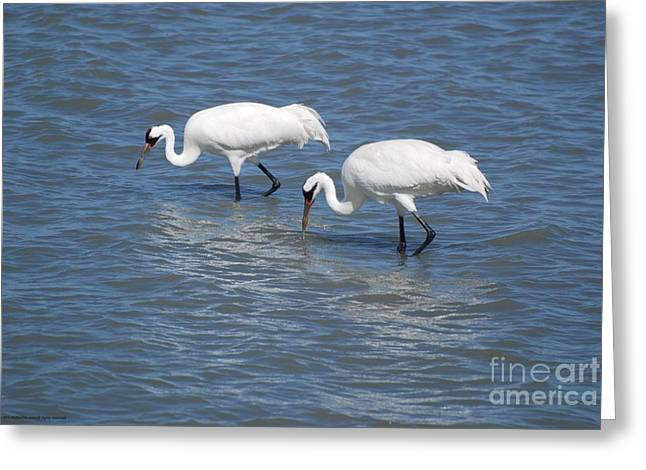 Wingtips Greeting Cards - See Sea Saw Greeting Card by GD Rankin