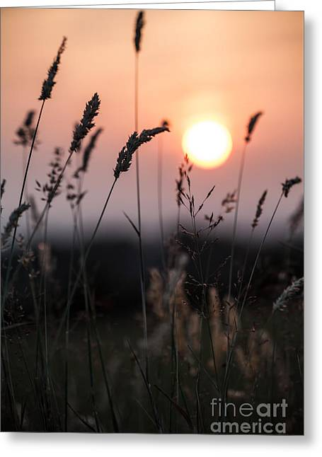 Rural Landscapes Greeting Cards - Seed Heads At Sunset Greeting Card by Jan Bickerton
