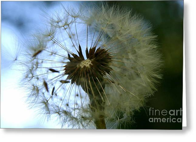Fine Art Flower Photography Greeting Cards - Seeded Greeting Card by Neal  Eslinger