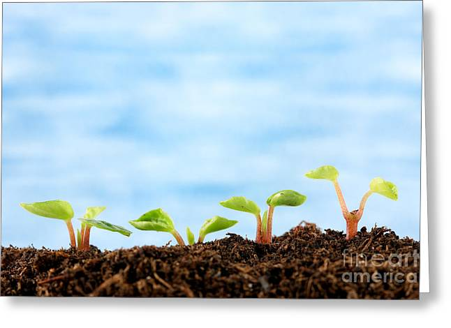 New Concepts Greeting Cards - Seedlings Greeting Card by Brandon Alms